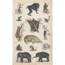 Elephants etc