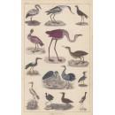 Flamingo etc